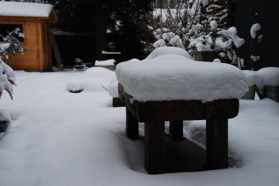 my snowy garden - copyright LosAngelas