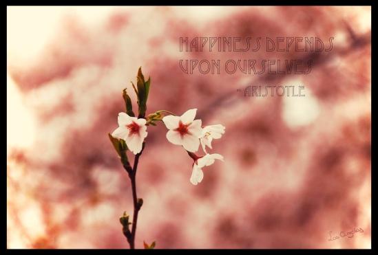 Blossoms 10.2 - Copyright LosAngelas