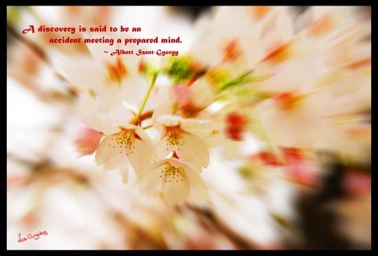 Blossoms 6.2 - Copyright LosAngelas