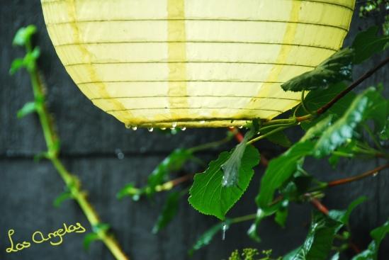 garden & rain 10 - copyright LosAngelas