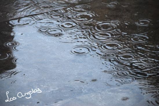 garden & rain 11 - copyright LosAngelas