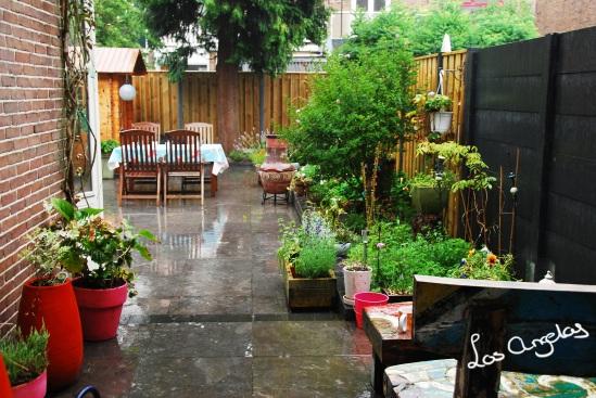 garden & rain 12 - copyright @ LosAngelas