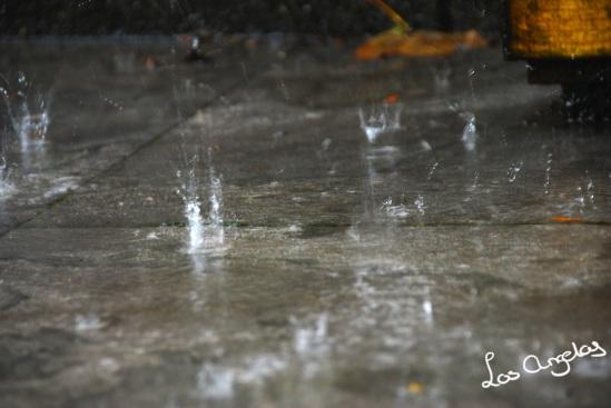 garden & rain 15 - copyright @ LosAngelas