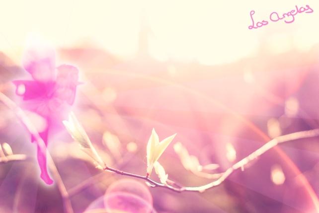 magical photography - copyright @ LosAngelas