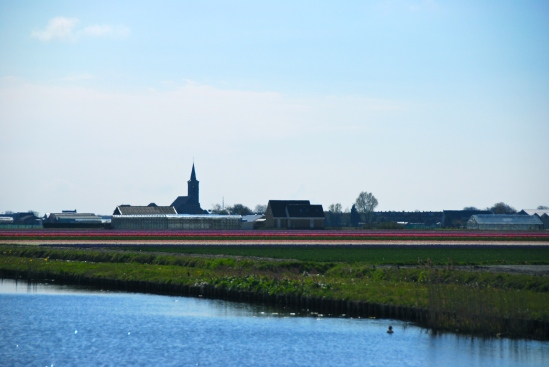 Dutch flower fields – Copyright @ LosAngelas