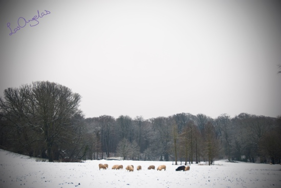 snowy morning in Elswout By LosAngelas