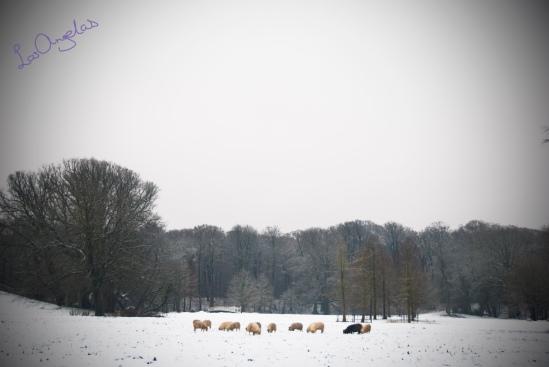 snowy morning in Elswout By LosAngelas