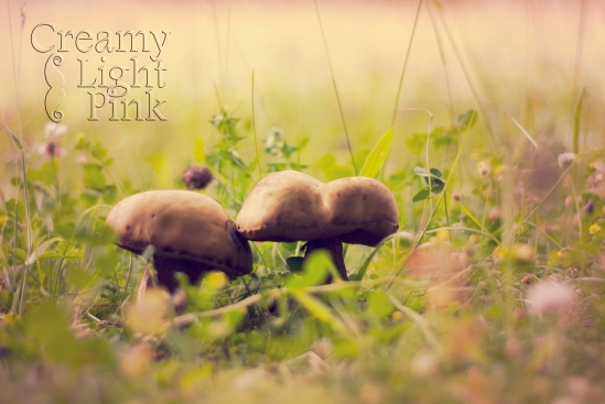 2 mushroom in grass @ LosAngelas