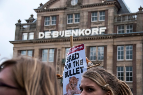 Global March For Lions - Blog 6